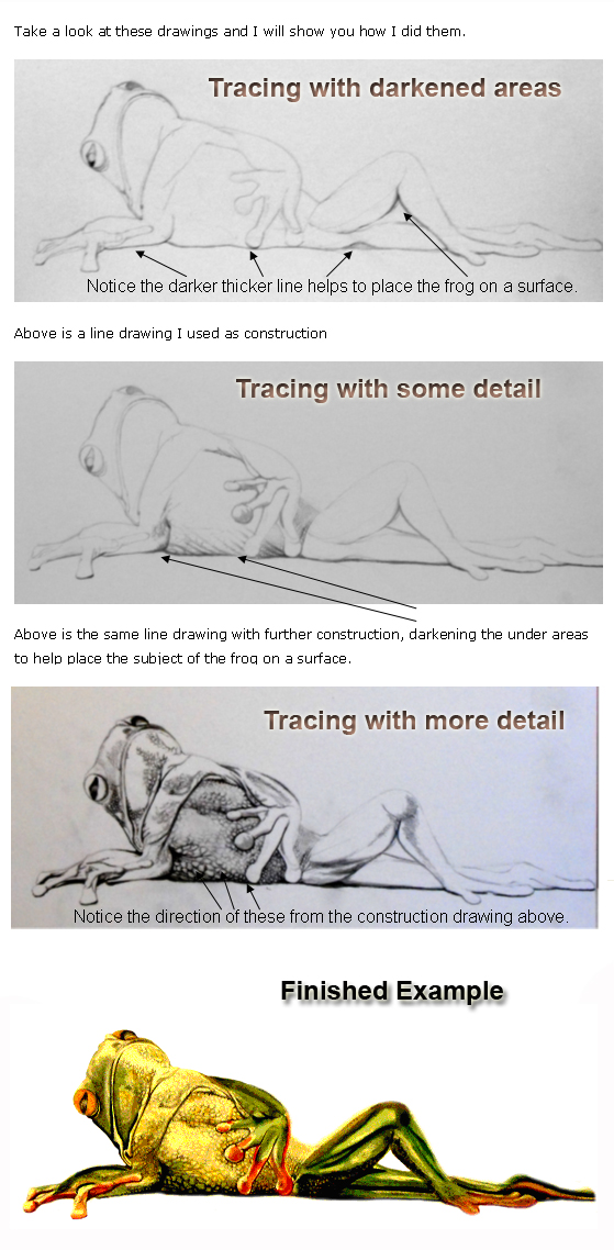 Progresive drawings of a frog tracing taken from an image on line to show you how to draw easy.
