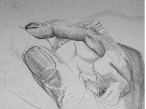 Pencil drawing photo image of a thumb and finger.