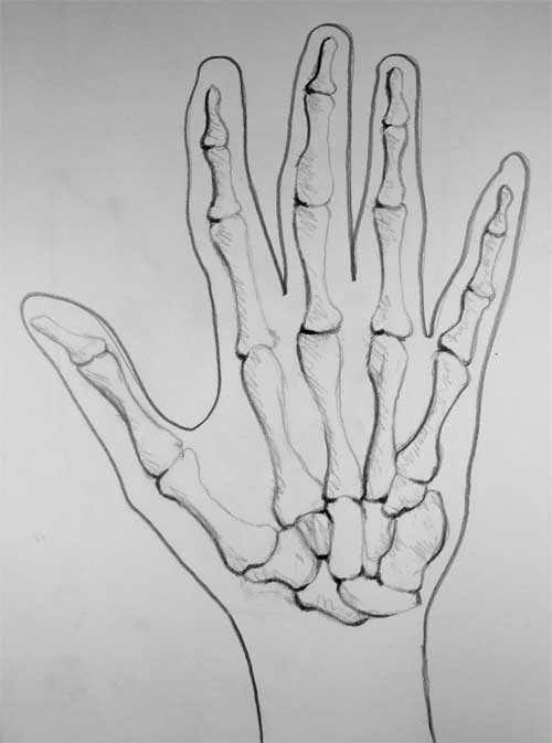 Picture of a hand of hand showing bone structure in some detail.